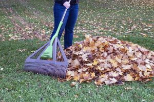 Drop by to try out our Dual Tine Leaf Rake!