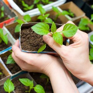 Starting Seedlings Indoors